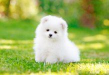 adorable-dog-puppy