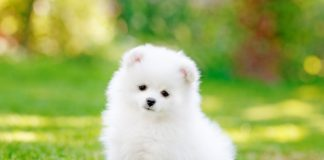 adorable-dog-puppy