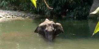 elephant-death-kerala