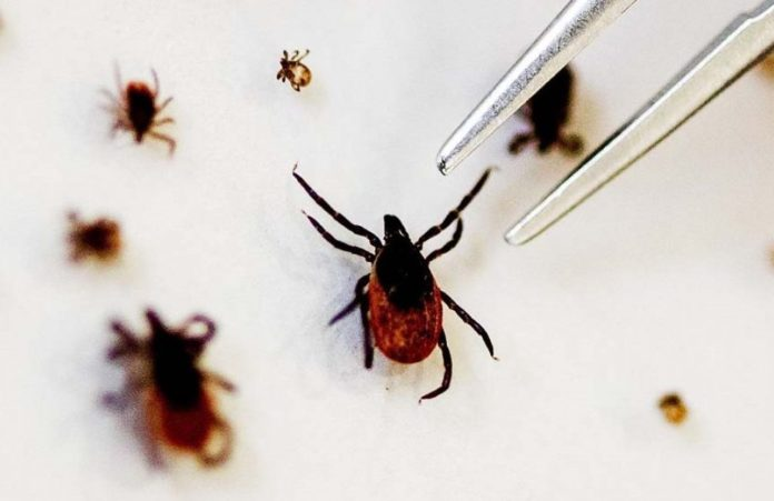 Tick-borne-virus-khabar-worldwide