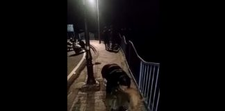 dog-thrown-into-lake-video-in-bhopal