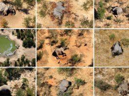 mystery-of-elephants-death