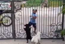 kid-dancing-to-tease-dogs