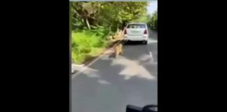 dog-tied-to-car-and-dragged-several-kilometers