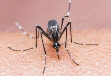 learn-easy-ways-to-get-rid-from-mosquitoes