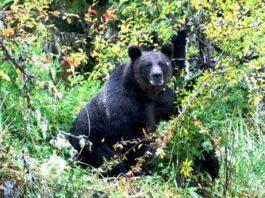wild-bear-attack-in-chhattisgarh