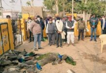 1700-birds-found-dead-in-himachal