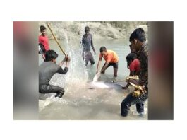 people-killed-dolphin-in-up