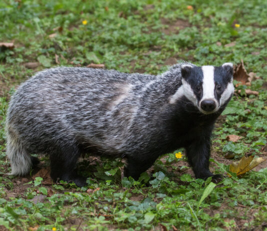 license-to-kill-threatens-the-life-of-creatures